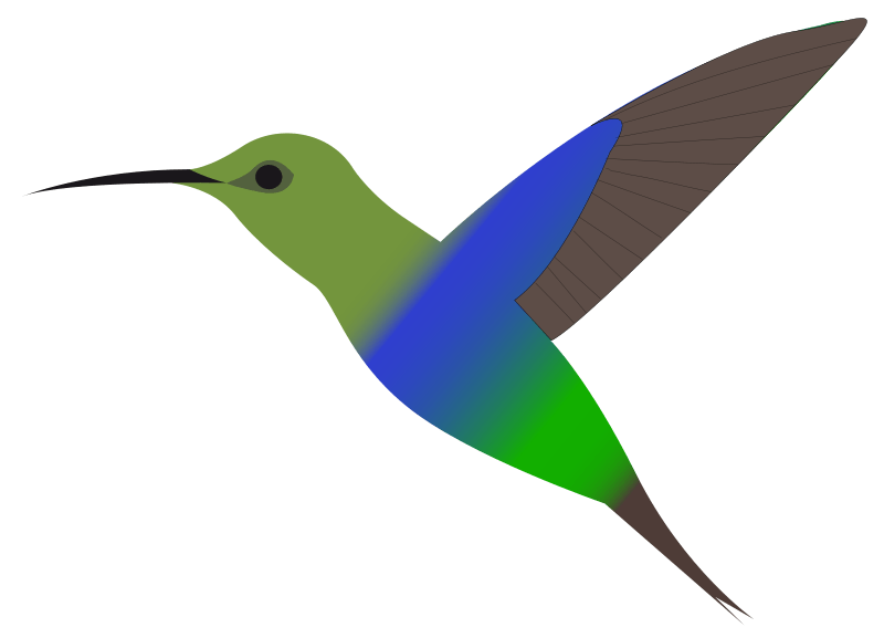 800x577 Hummingbird Cliparts