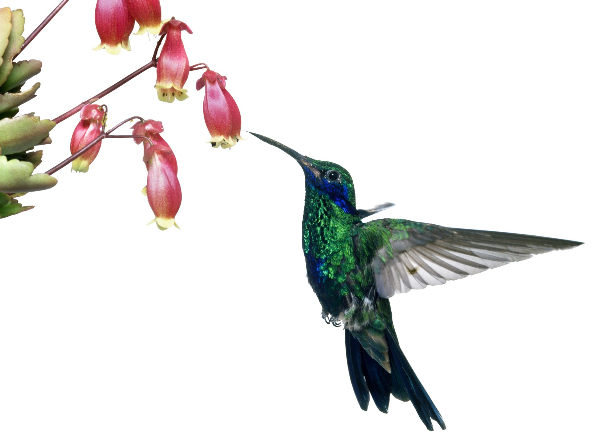 1920x1427 Hummingbird Facts Where Do Hummingbirds Live Dk Find Out