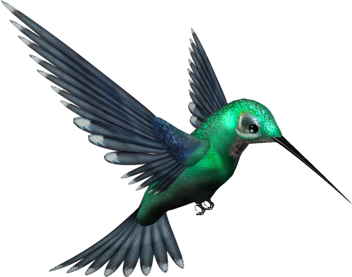 719x566 Hummingbird Png Transparent Images Png All