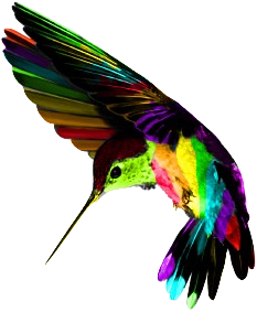 233x283 Hummingbird Large