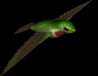 333x258 Clipart Hummingbird 1 Hummingbird Clipart