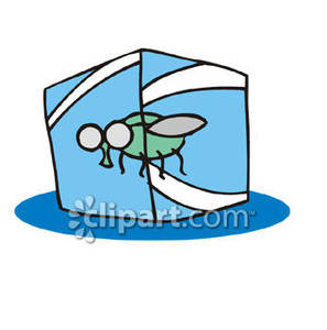 297x300 Fly Frozen In An Ice Cube Royalty Free Clipart Picture
