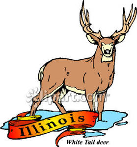 279x300 White Tailed Deer, The State Animal Of Illinois