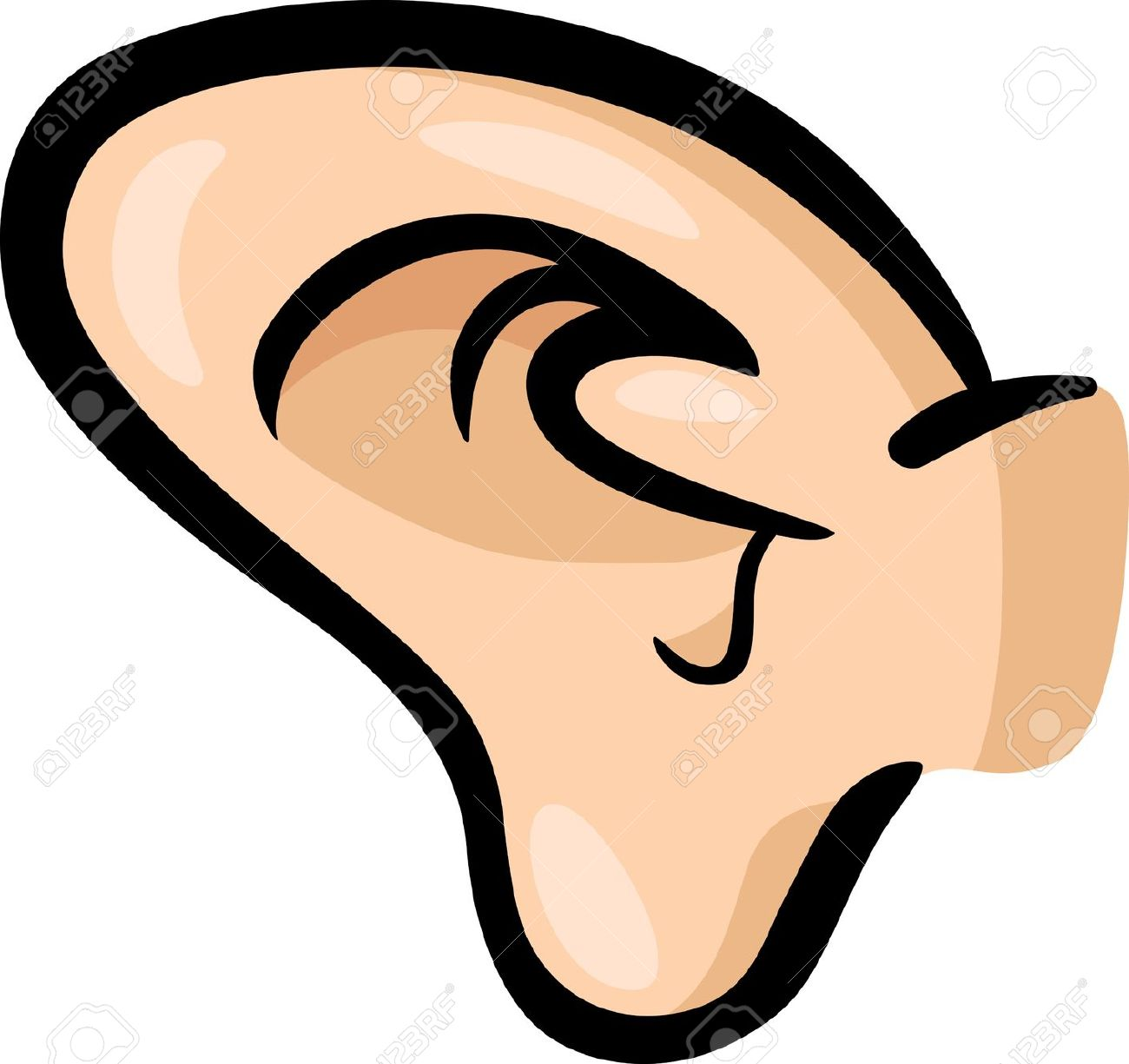 Image Of The Ear Clipart