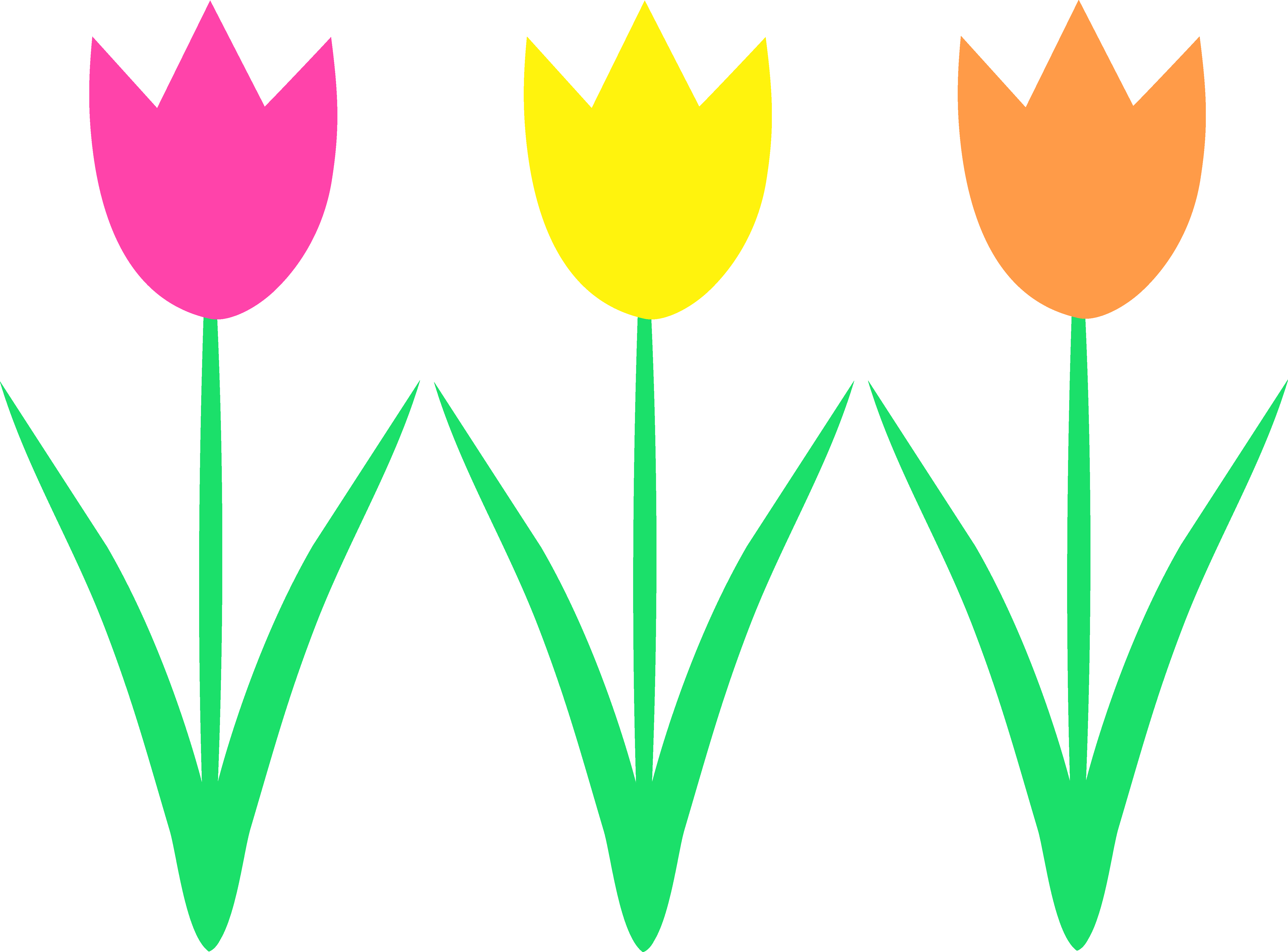 5627x4161 Cute Spring Tulips Design