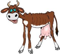 Images Of A Cow Clipart