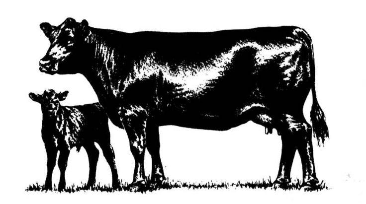 736x411 Cow Free Angus Clip Art Angus Merchandise Cattle Clip
