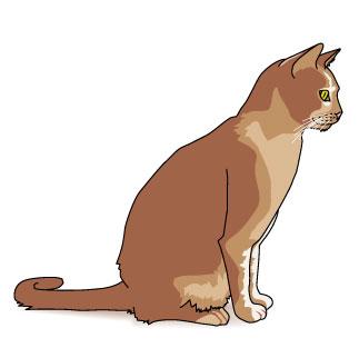 323x322 Cat Clipart Brown