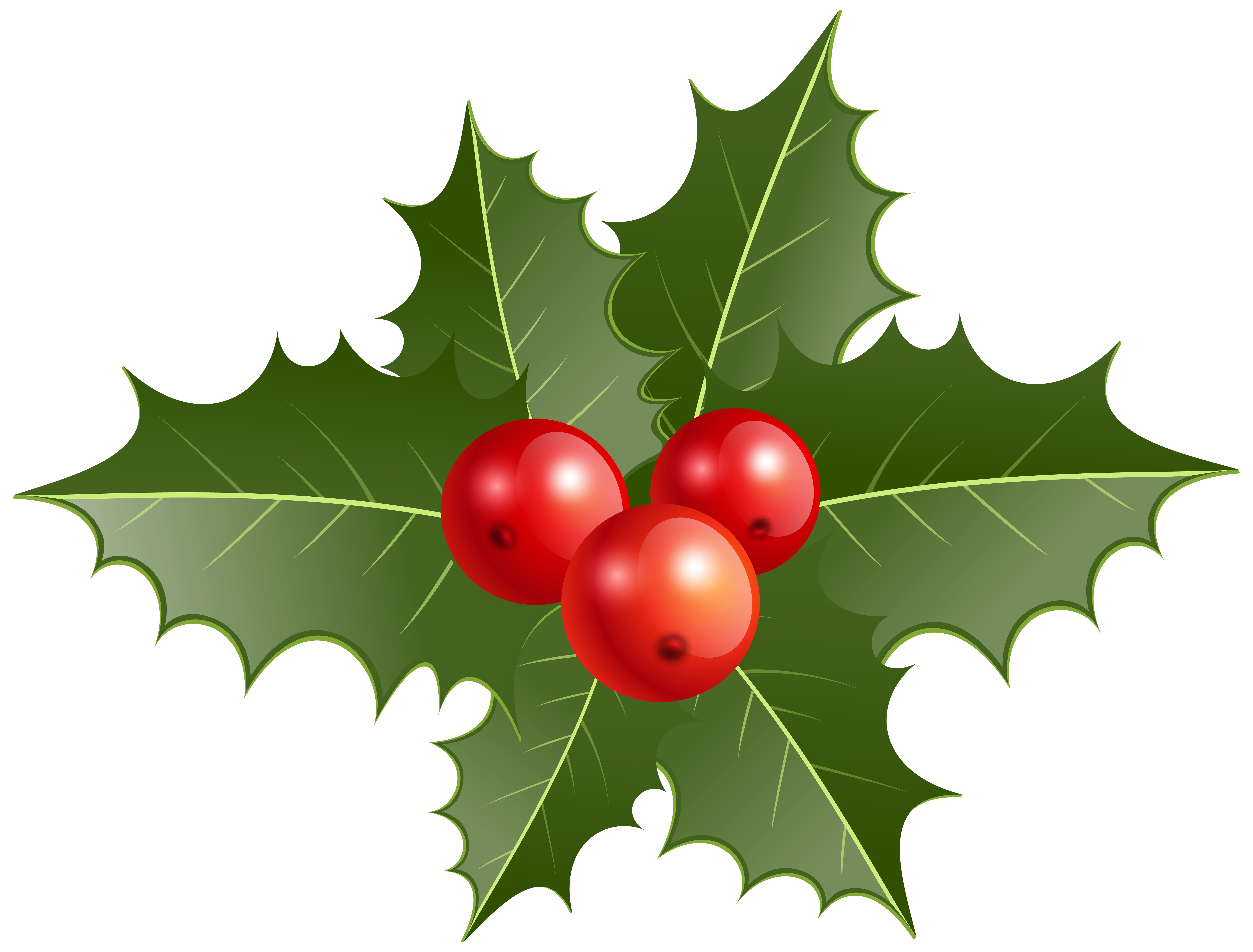 8000x6081 Christmas Holly Png Clip Artu200b Gallery Yopriceville