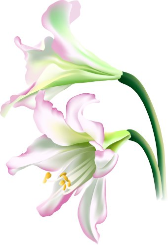 340x494 White Flower Clipart Lilly
