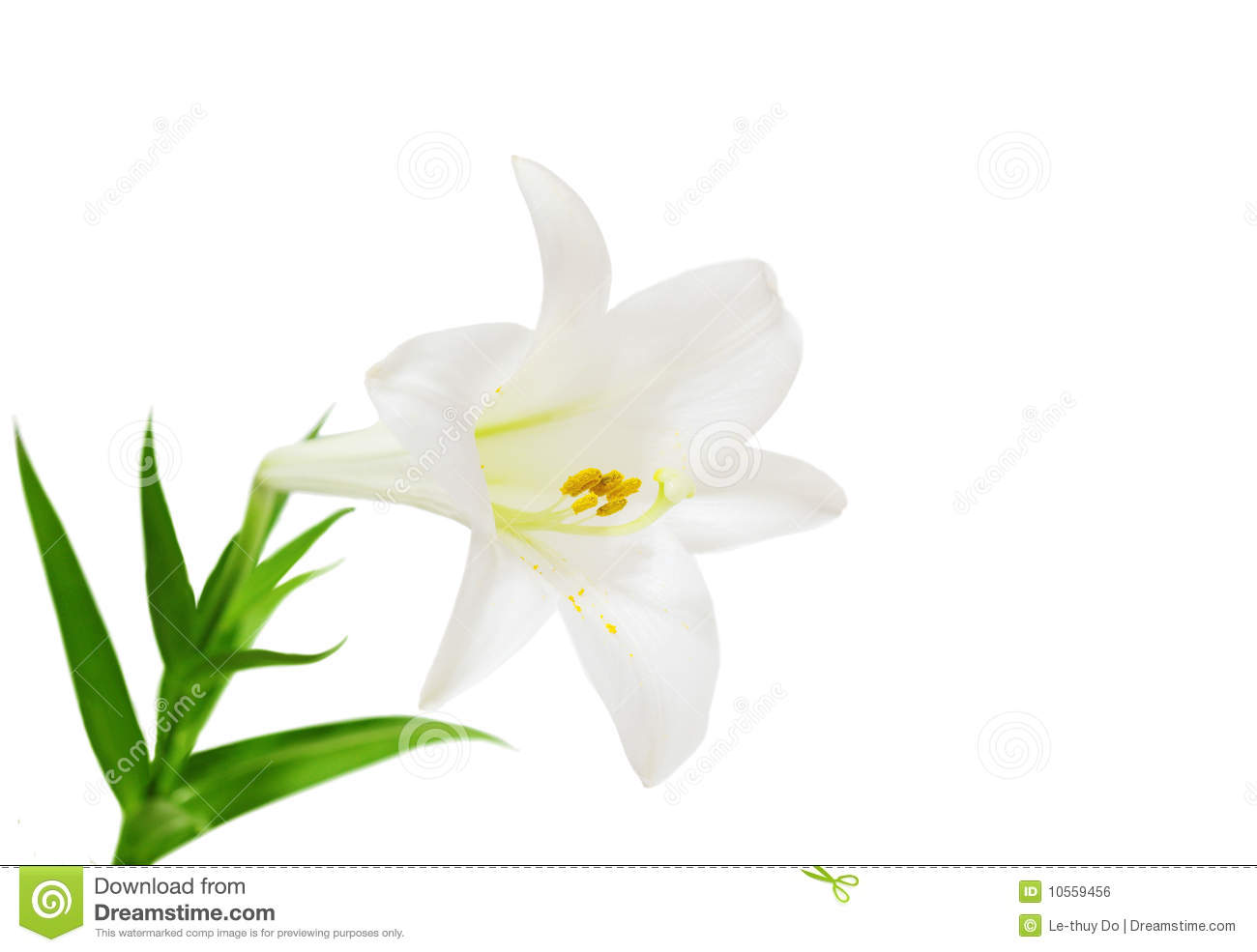 1300x985 Clipart And Easter Lilly