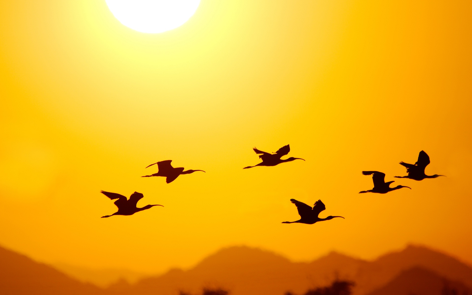 1920x1200 Images Of Good Morning Sunshine Sky