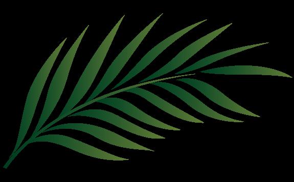 575x356 Palm Sunday Leaf Clipart Kid
