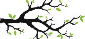 272x125 Clip Art Tree Branches Clipart Panda