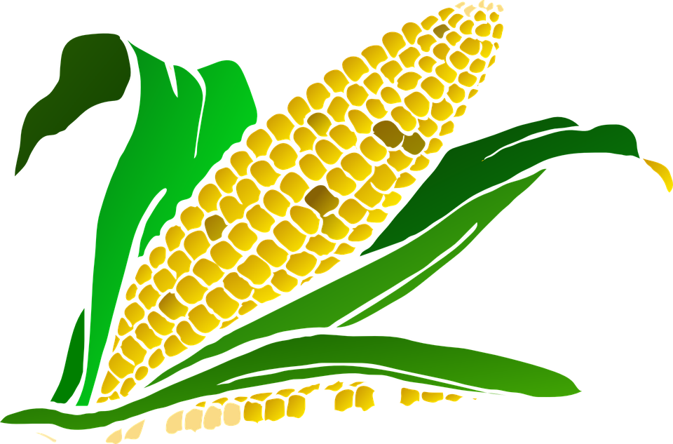 960x633 Free Photo Food Crop Maize Agriculture Plant Corn
