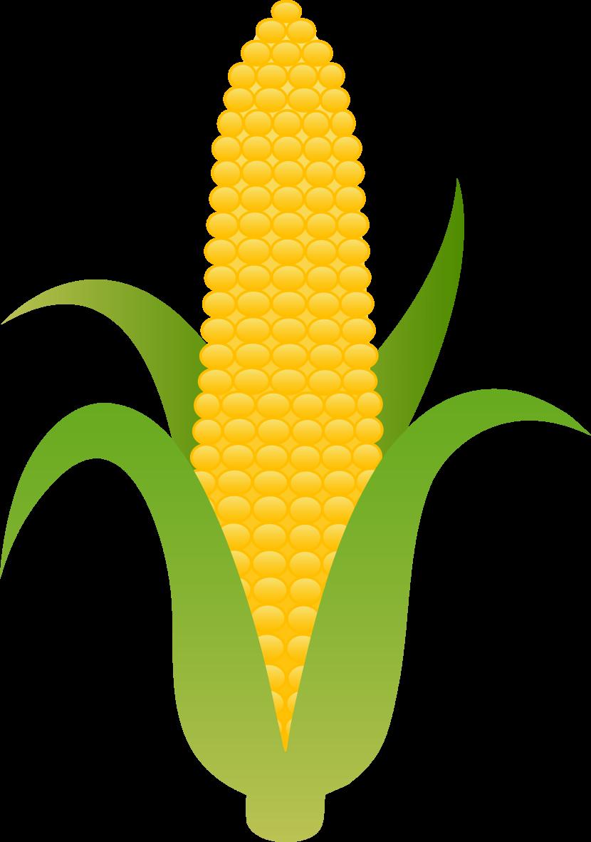 830x1181 Indian Corn Clipart