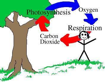 354x277 Carbon Cycle Clip Art
