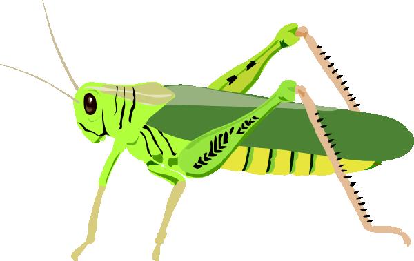 600x379 Bugs Clipart Cricket