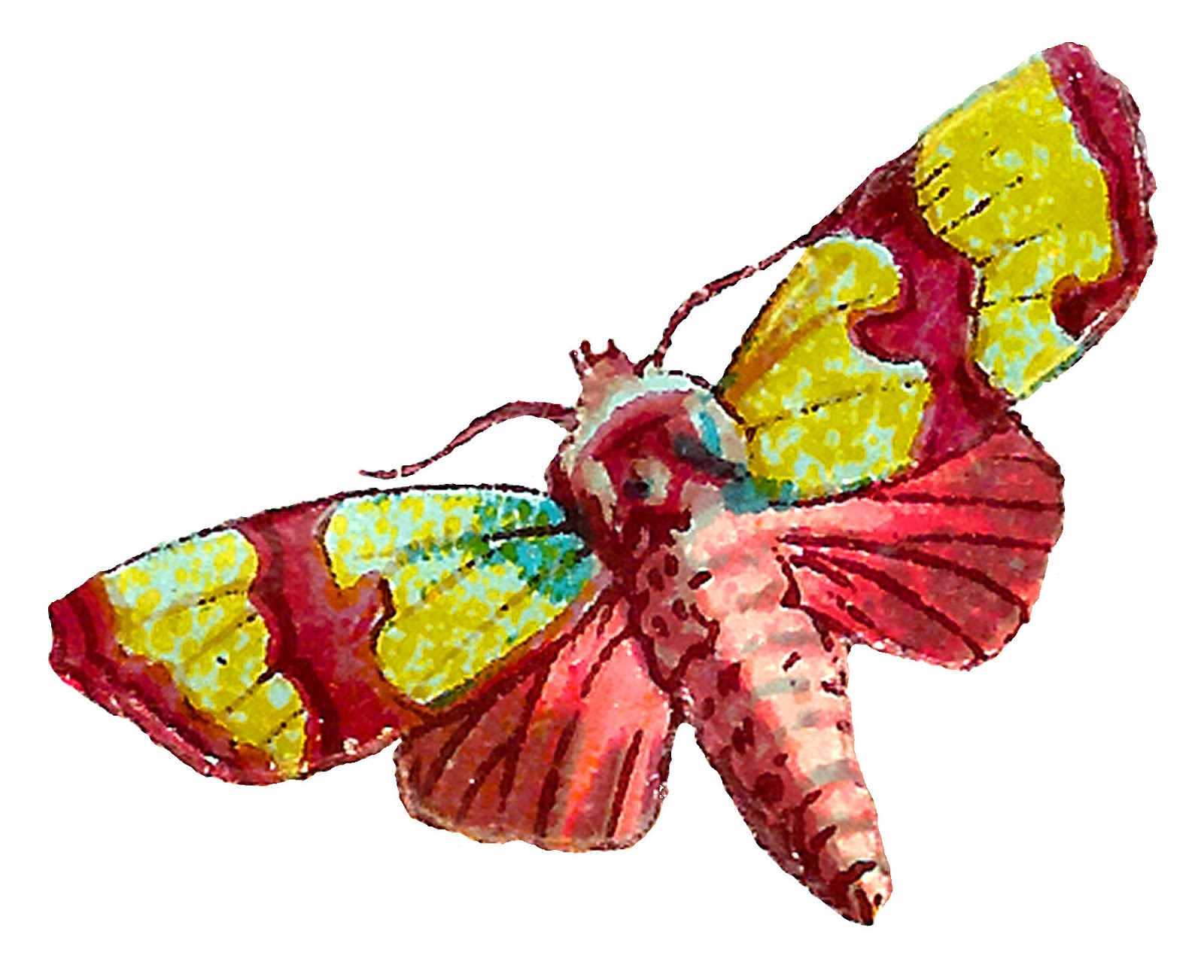 Insect Clipart | Free download best Insect Clipart on