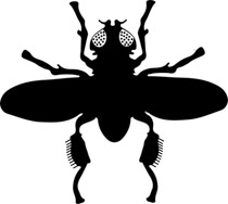 210x188 Free Insect Clipart