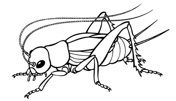 600x344 Insect Clipart Black And White 10 Nice Clip Art