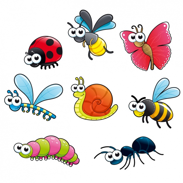 626x626 Colors Clipart Insect