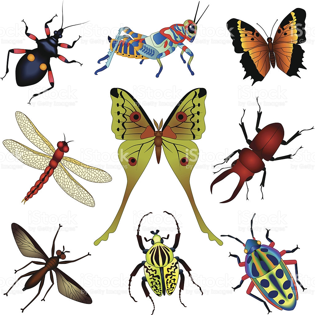 1024x1022 Insect Clipart Rainforest Butterfly