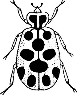 250x309 Bugs Black And White Clipart