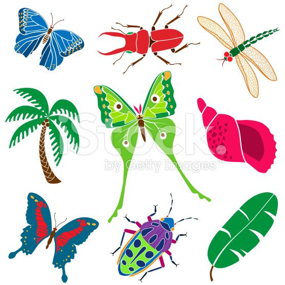 556x556 Insect Clipart Rainforest Butterfly