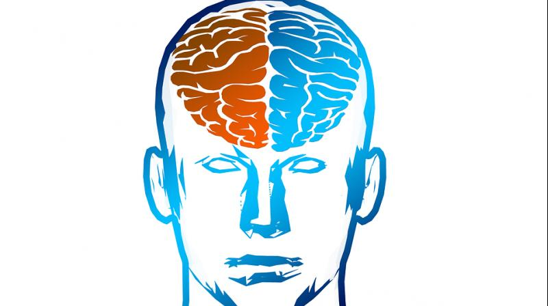 800x448 Brains Clipart Mind Reading