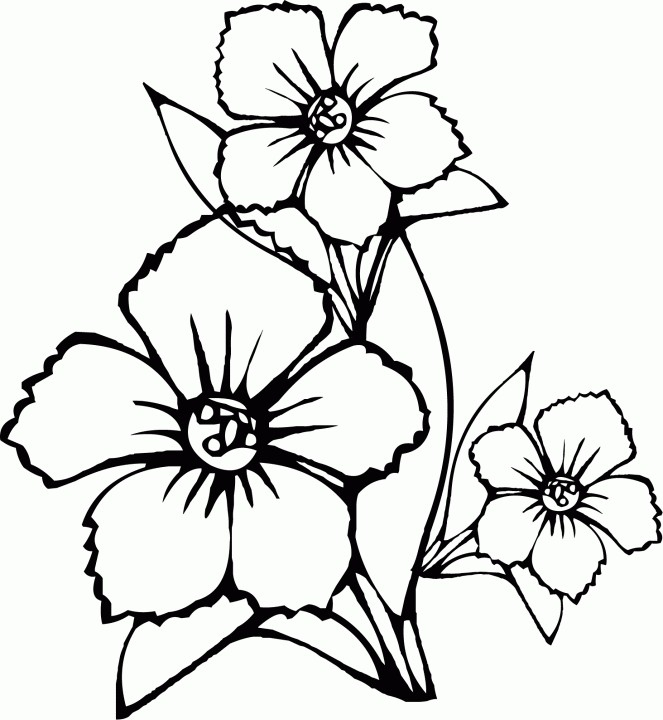 663x720 Coloring Pages Kids Flowers Iphone Coloring Coloring Pages