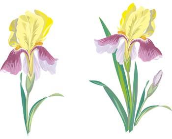 350x283 Iris Flower Clip Art 1 Clipart Panda