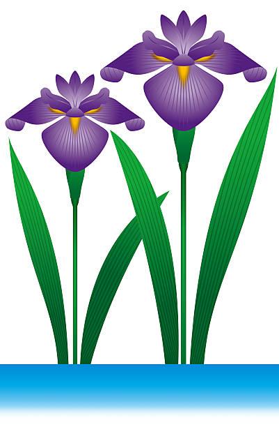 401x612 Iris Clipart Art