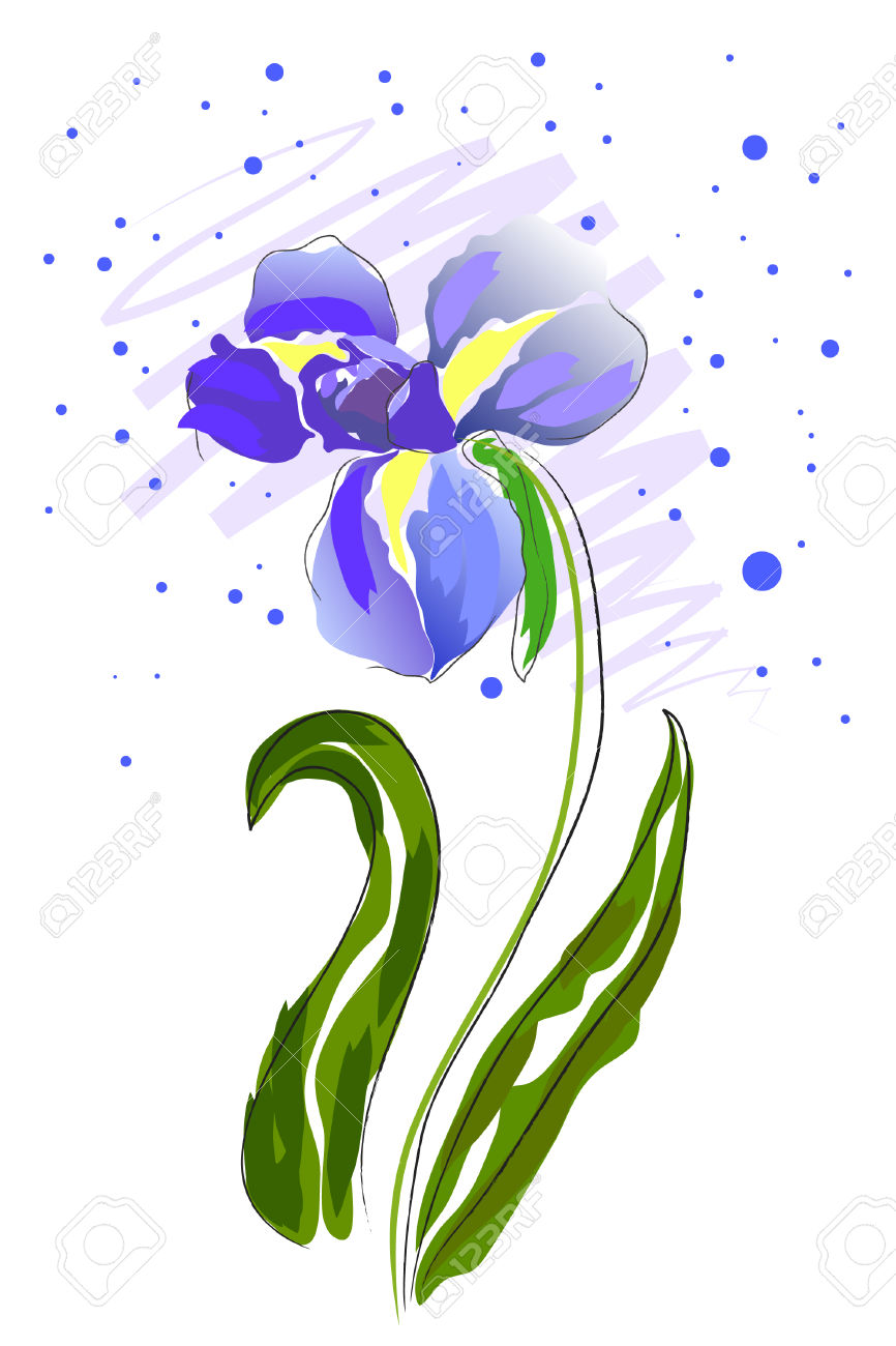 866x1300 Iris Clipart White Background
