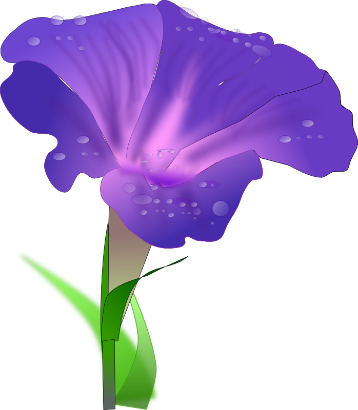 698x800 Morning Glory Clipart