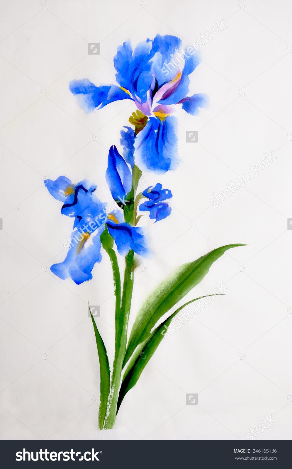 996x1600 Iris Flower Clip Art