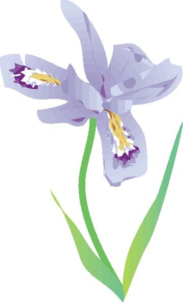 360x592 Dwarf Lake Iris Clip Art