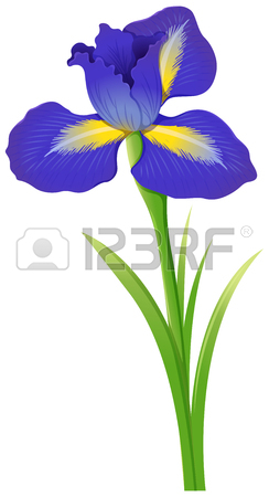 244x450 Blue Iris Flowers In Bush Illustration Royalty Free Cliparts