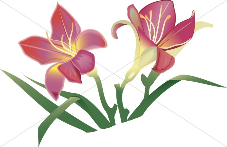 776x505 Church Flower Clipart, Church Flower Image, Church Flowers Graphic