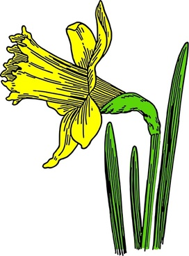 272x368 Daffodil Free Vector Download (17 Free Vector) For Commercial Use