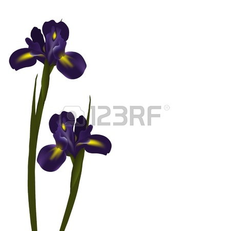 447x450 Iris Flower Clip Art