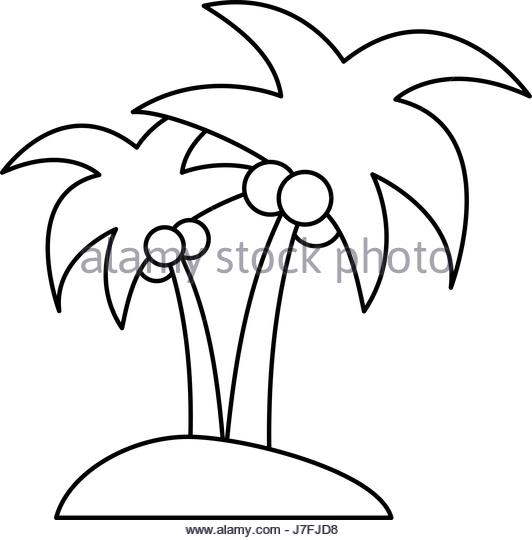 532x540 Coconut Palm Tree Black And White Stock Photos Amp Images