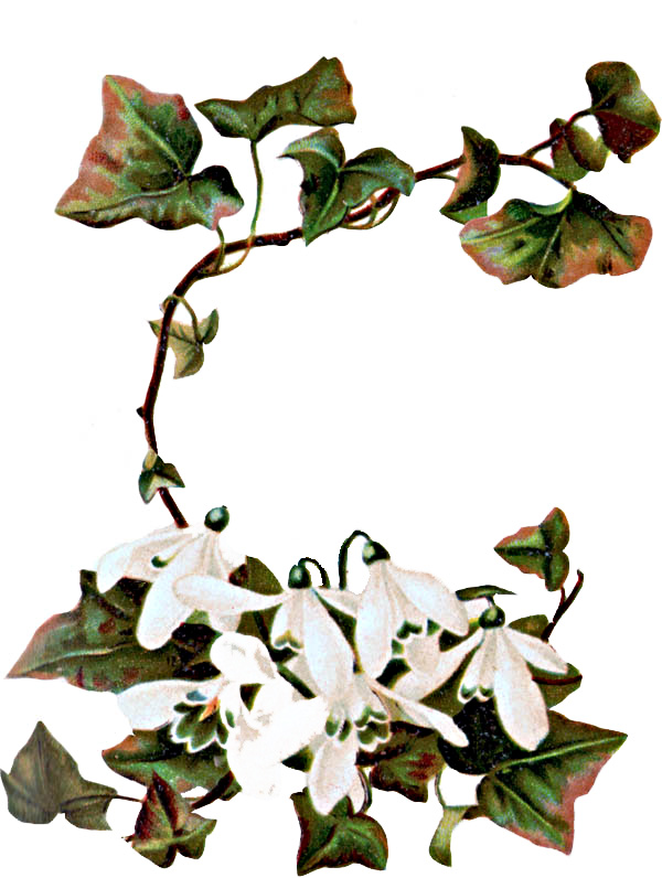 ivy clipart free download best ivy clipart on clipartmag com