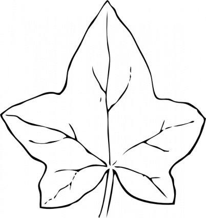 402x425 Ivy Leaf, Vector File