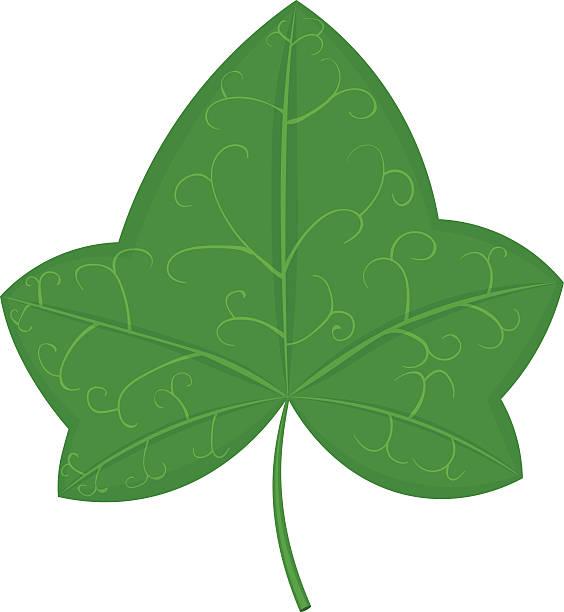 564x612 Maple Leaf Clipart Ivy Leaf