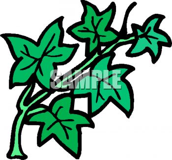 350x325 Royalty Free Clipart Image Cartoon Ivy Leaves
