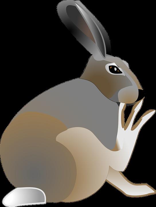544x720 Jack Rabbit Clipart Cute Rabbit