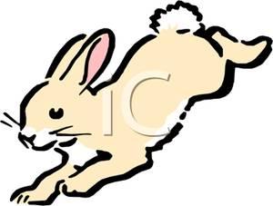 300x227 Jack Rabbit Clipart Rabbit Hopping