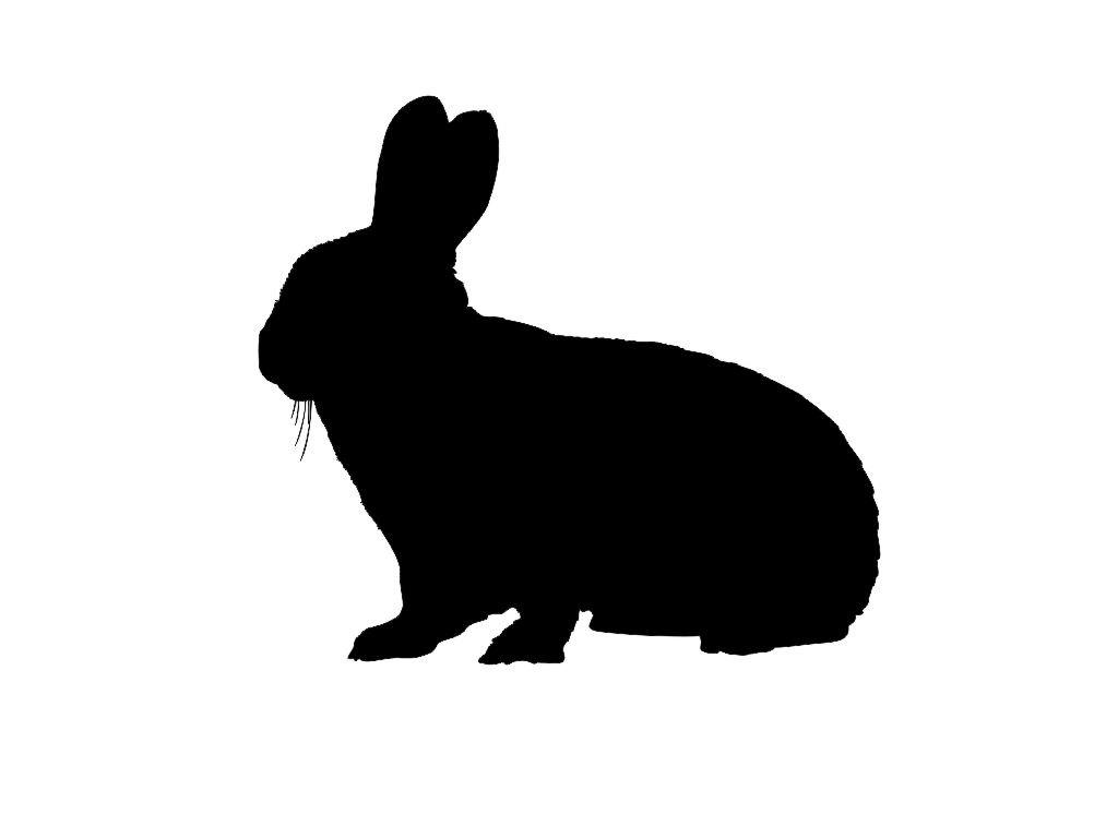 1024x768 Jack Rabbit Clipart Rabbit Outline