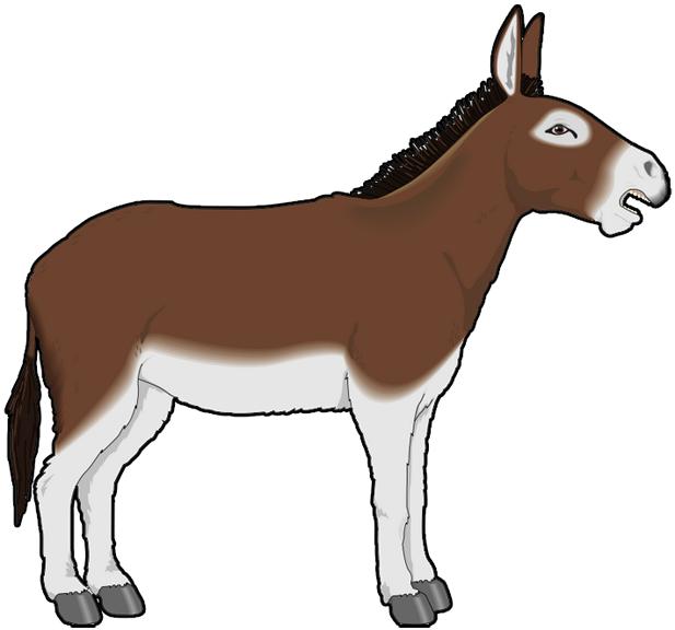 617x576 Donkey White Background Images All White Background